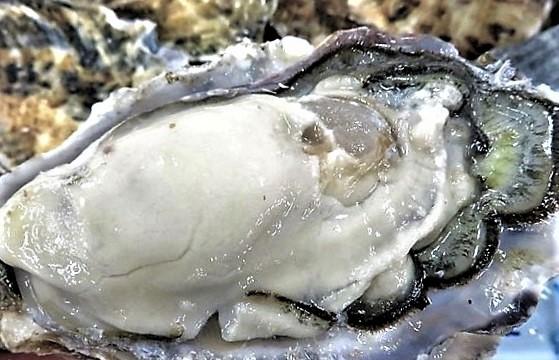 京都の岩牡蠣